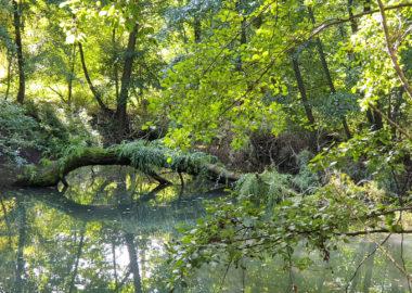 Der geheime Garten … in Climbach