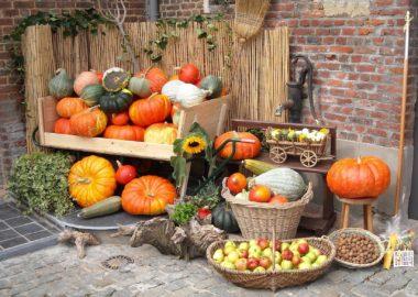 Regional & saisonal: Was gibt's im Oktober?
