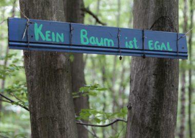 """Rettung für """"Danni""""? Bitte steh auf für den uralten Wald und schließe Dich am Sonntag der Mahnwache an"""