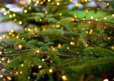 Bio-Weihnachtsbaum-Verkauf in Treis