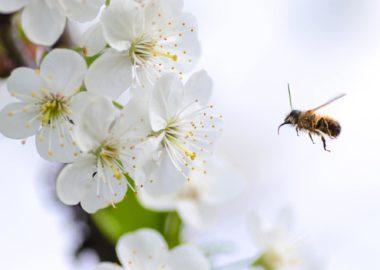 Bienenfreundlicher Garten: Online-Vortrag am 22.04.